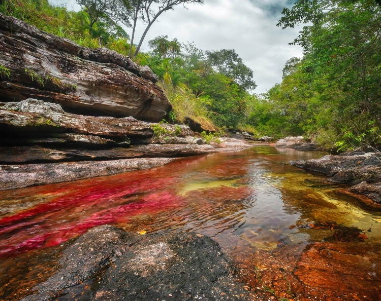 Caño Cristales, Colombia | Alternatives to Iconic Sights of South America